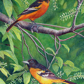 Baltimore Orioles by Todd Hatchett