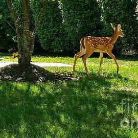 Bambi by Neal Alicakos