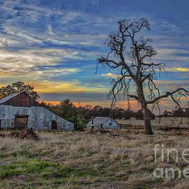 Mitch Shindelbower - Barn  And Oak Tree