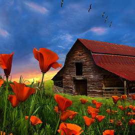 Barn in Poppies II by Debra and Dave Vanderlaan