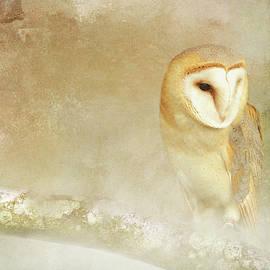 Barn Owl in Fog by Terry Davis