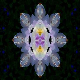 Baroque Fantasy Flowers Ornate by Pepita Selles