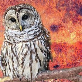 Barred Owl by Lorraine Baum