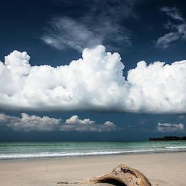 Beach driftwood and dark blue sky by Juhani Viitanen