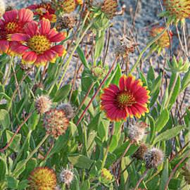 Beach Sunrise Flowers by Dale Powell