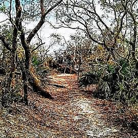 Beach Trail by Tricia Jeter
