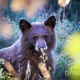 Bear Cub in Fall Colors by Webb Canepa
