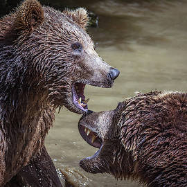 Toby Luxberg - Bear Fight