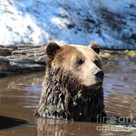 Bear in water  by Karen Moss