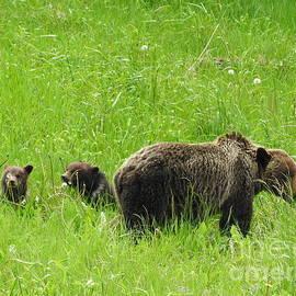 Bear With Cubs Jasper National Park Alberta Canada by Art Sandi