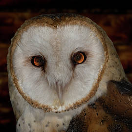 Elizabeth Waitinas - Beautiful Barn Owl