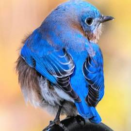 Mary Ann Artz - Beautiful Bluebird