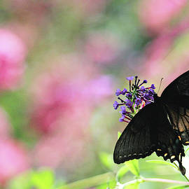 Beautiful Butterfly by Trina Ansel