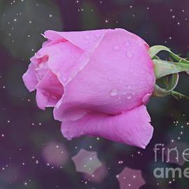 Beautiful Pink Rose by Debby Pueschel