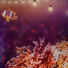 Beautiful Red Sea Coral Reef The Creative Way by Johanna Hurmerinta