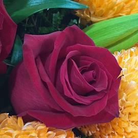Beautiful Rose by Tania Read