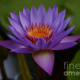 Beauty in the pond by Myrna Bradshaw