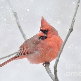 Beauty in the Snow by Debbie Green