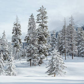 Beauty Of The Season by Ann Skelton