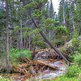 Beaver Dam by Lorraine Baum
