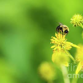 Bee Aside by Jennifer White
