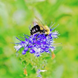 Bee And Bloom by Alida M Haslett