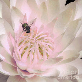 Bee on White Water Lily sprinkled in pink by Banyan Ranch Studios