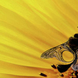Bee on Yellow Flower by Carel Schmidlkofer