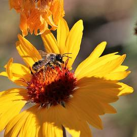 Bee Sunny by Larry Kniskern