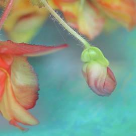 Begonia Close Up by Jeff Burgess