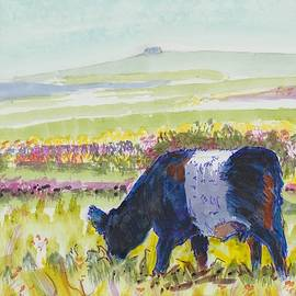 Belted Galloway Cow Dartmoor Watercolour Painting by Mike Jory