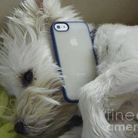 I Beni And His Unlimited Talk Plan West Highland White Terrier Westie by Art Sandi