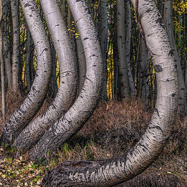 Bent Out of Shape by Chuck Jason