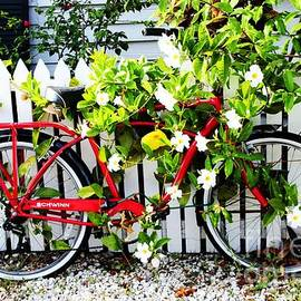 Bicycle by the Fence in Flowers by Mesa Teresita
