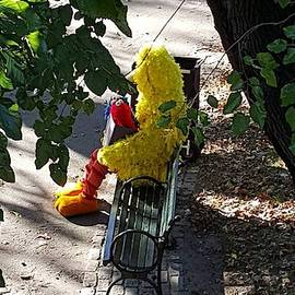 Big Bird Taking A Break In Central Park by Rob Hans
