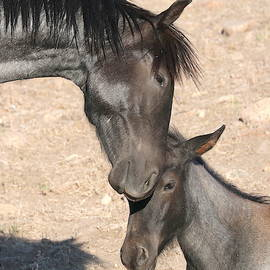 Big brother love Bolt and lil brother Smoky  by Cheryl Broumley