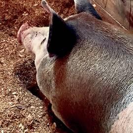 Big Day, Big Hog by Alida M Haslett