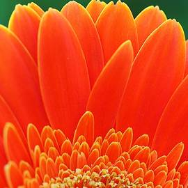 Big Orange by Denise Benson