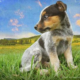 Big World, Little Dog by R christopher Vest