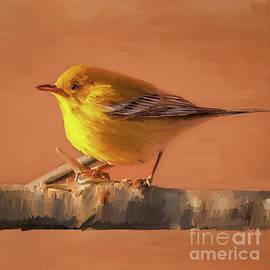 Bird 02a by Gull G