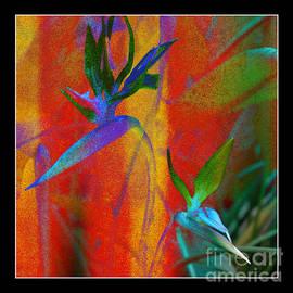 Bird Of Paradise Creative With Border by Carol Groenen