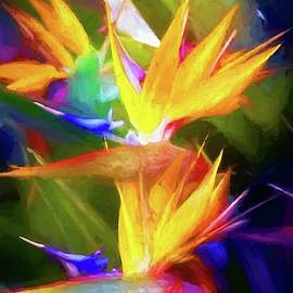 Bird Of Paradise Hues by Alice Gipson
