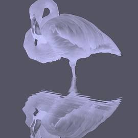 Bird Reflection by Marvin Blaine