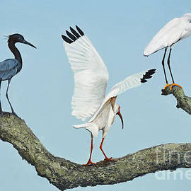 Birds Out on a Limb by Jimmie Bartlett