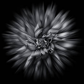 Brian Carson - Black and White Flower Flow No 5