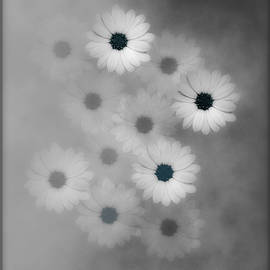Johanna Hurmerinta - Black And White Flower Harmony With a Touch Of Blue