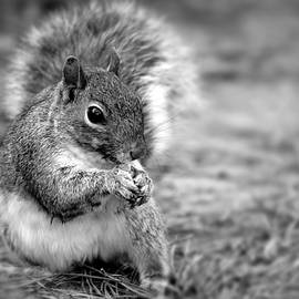 Stamp City - Black and White Squirrel Portrait