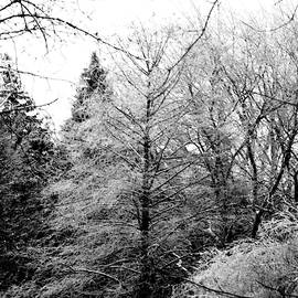 Black and White Winter's Forest by Roseann Stachowiak