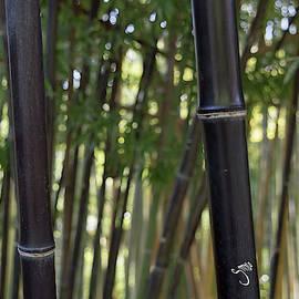 Black bamboos by Smylo