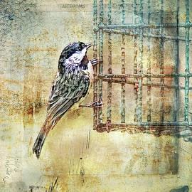 Bellesouth Studio - Black Capped Chickadee